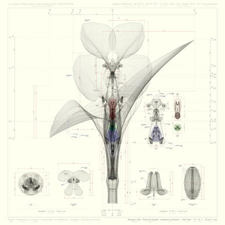 3D-Botanik von Macoto Murayama