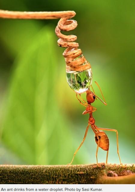 Makrophotos von Insekten