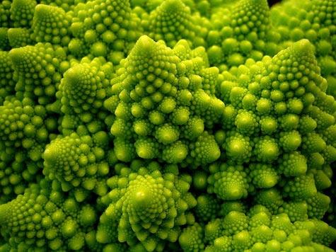 einfach nur brokkoli